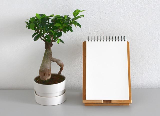 De verschillende planten voor jouw woning