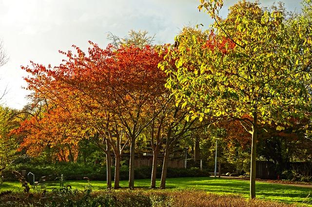 De drie vormen van tuinonderhoud kan je beter uitbesteden aan een specialist