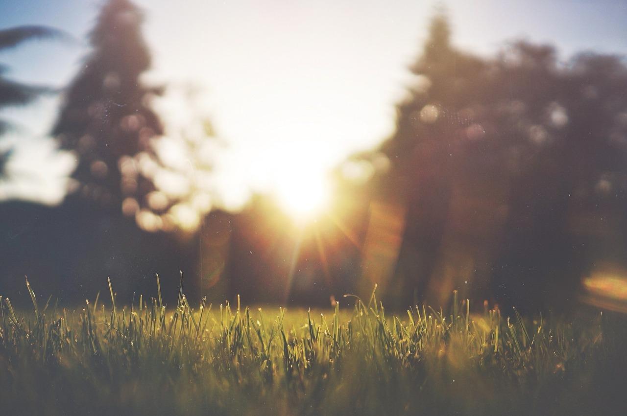 De tuin zomerproof maken: 3 tips