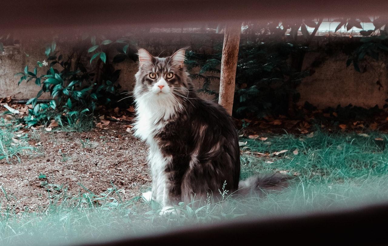 4 tips om een kattenpis geur te verwijderen in je tuin